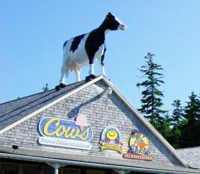 pei-cow-on-roof