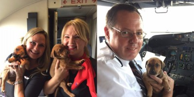 southwest-airlines-flew-a-plane-full-of-puppies-to-help-them-escape-from-hurricane-harvey